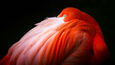 Wonderful flamingo