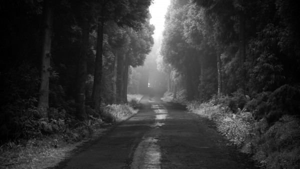 Road thru the dark forest