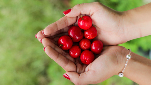 Hands filled with cherries