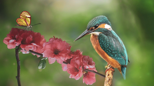 Kingfisher and the butterfly