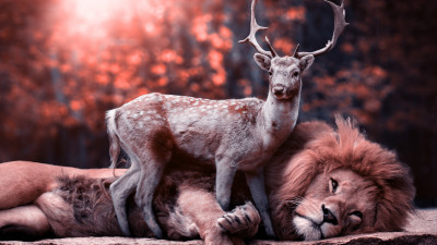 The lion and the deer