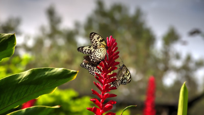 Butterflies on red flowers