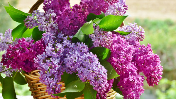 Best basket with lilac flowers
