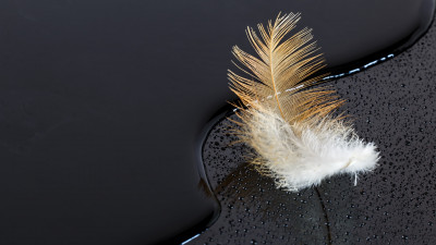Dark surface with a feather on water