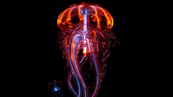 Luminous jellyfish
