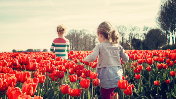 Children in the land with tulips