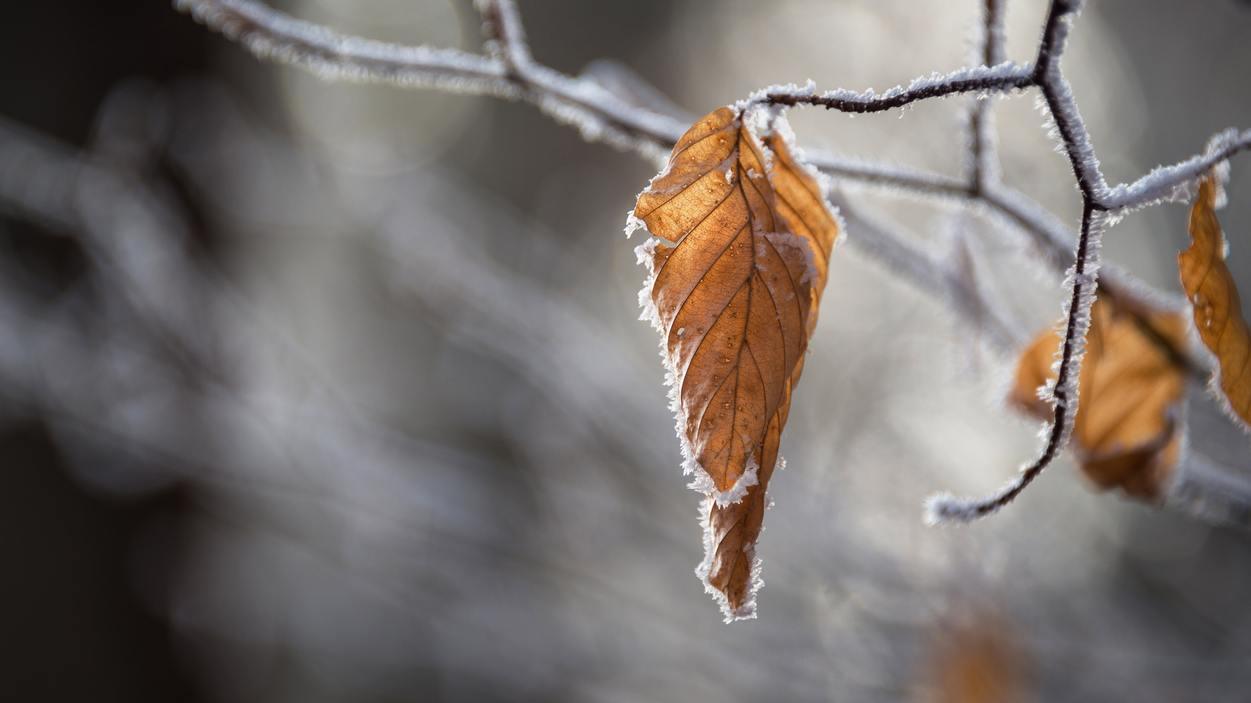 Dried leaves wallpaper 5120x2880