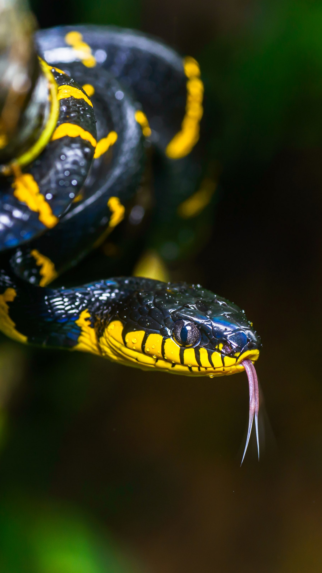Mangrove snake wallpaper 1080x1920