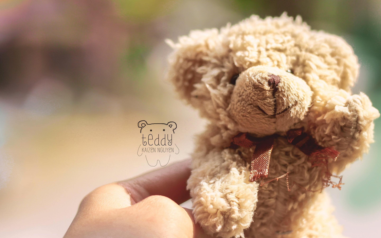 Download Wallpaper Teddy Bear 2880x1800