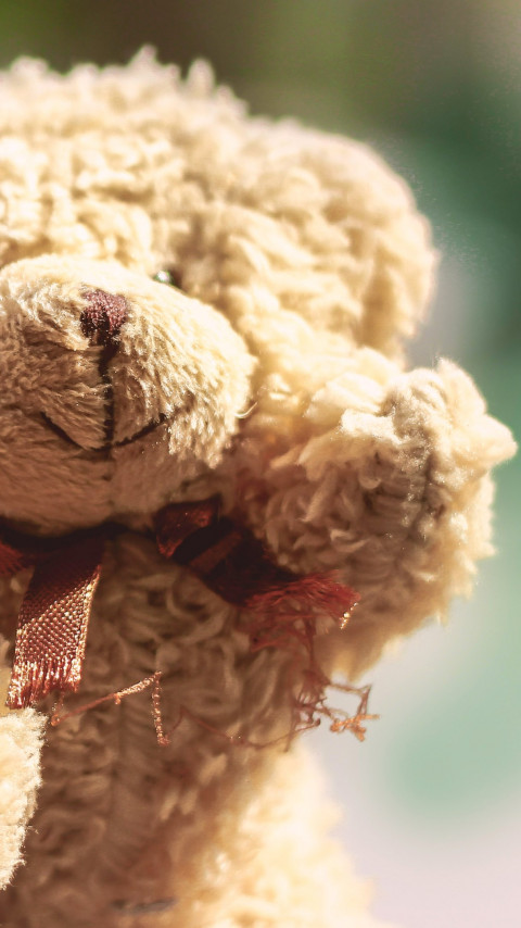 Teddy Bear wallpaper 480x854