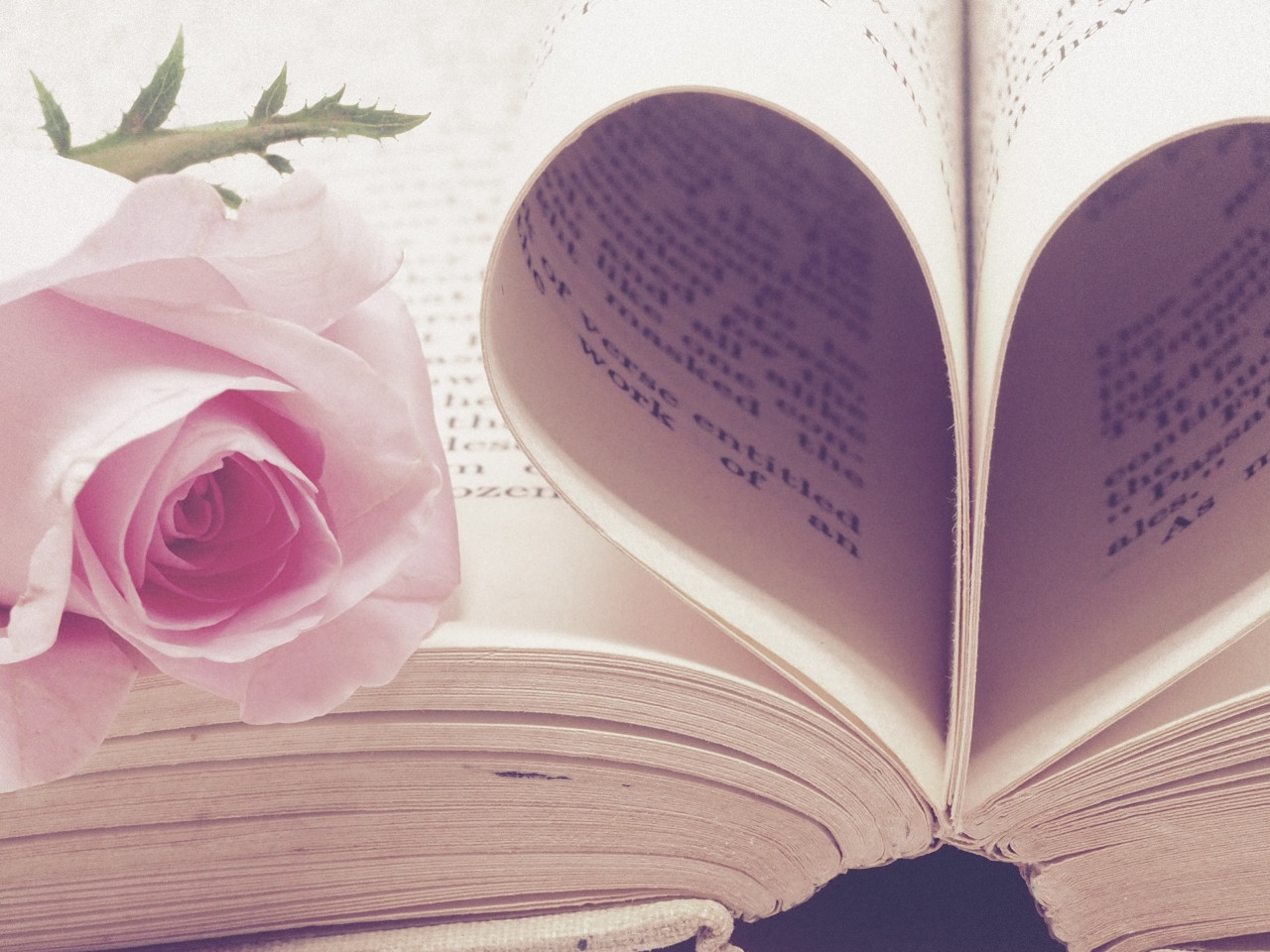 Rose flower and love book wallpaper 1280x960