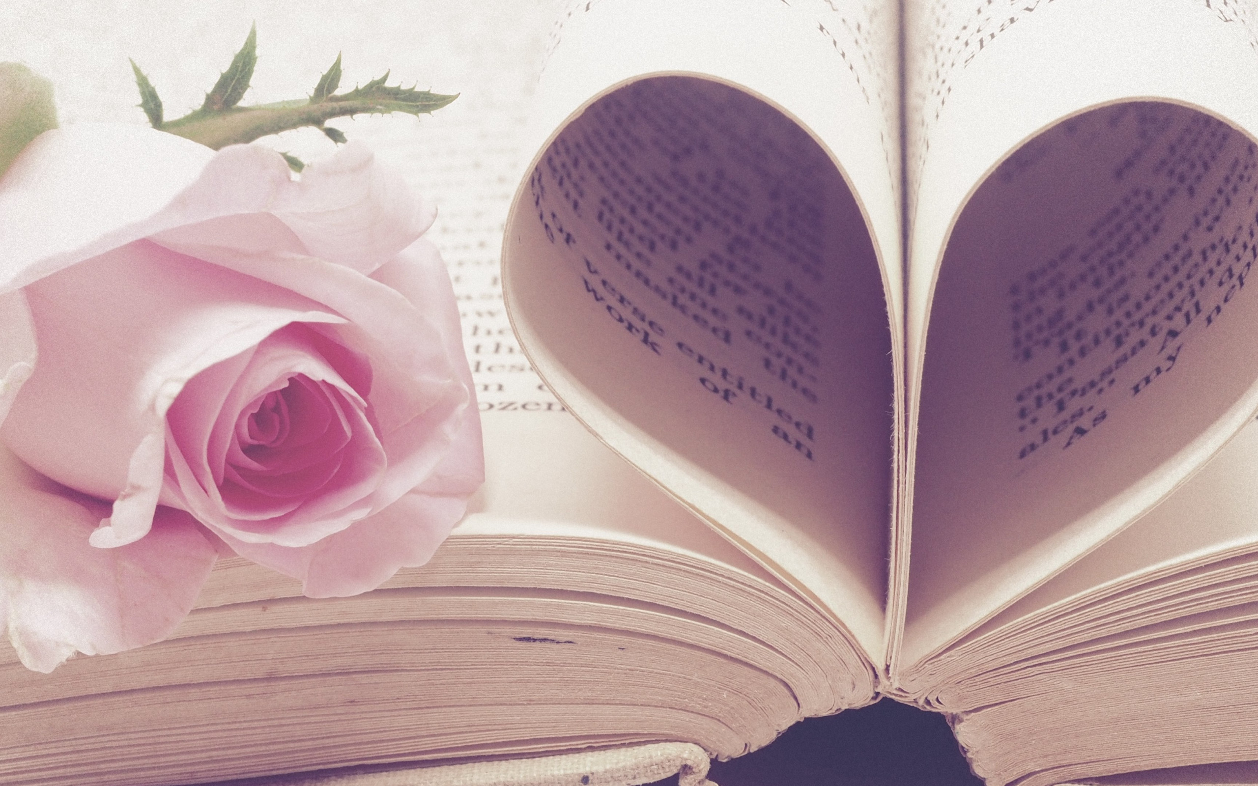 Rose flower and love book wallpaper 2560x1600