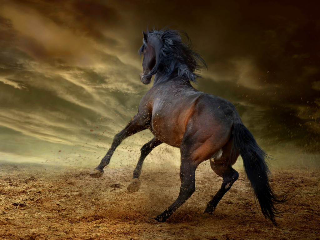 Horse freedom wallpaper 1024x768
