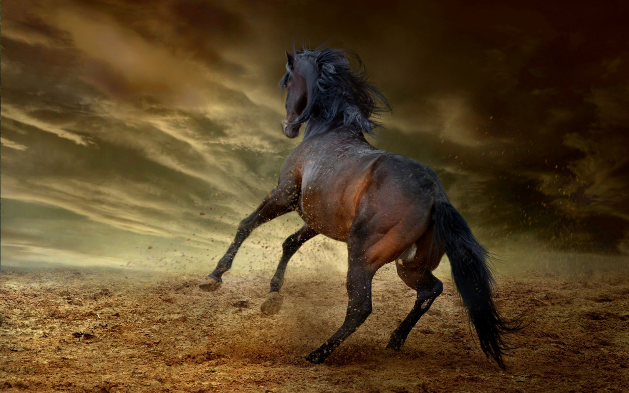 Horse freedom wallpaper 1280x800