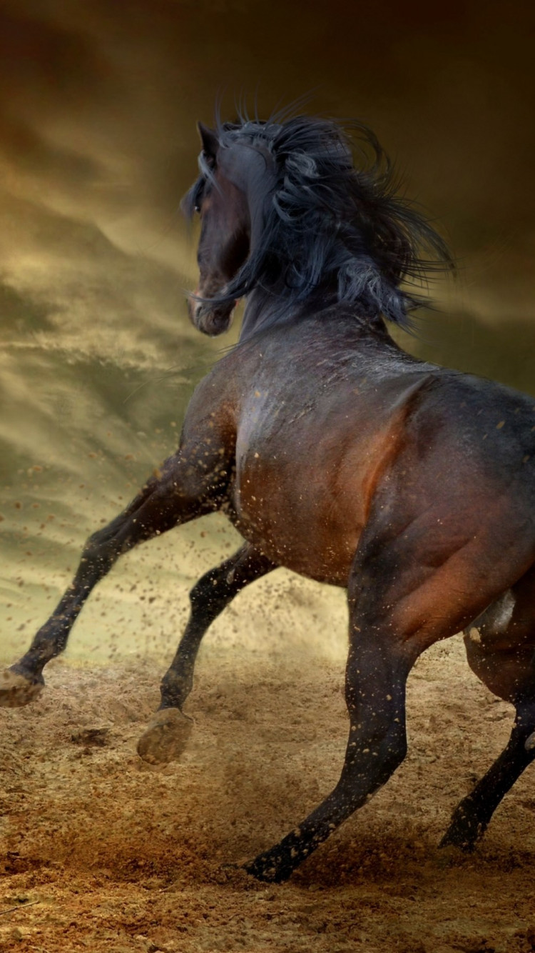 Horse freedom wallpaper 750x1334