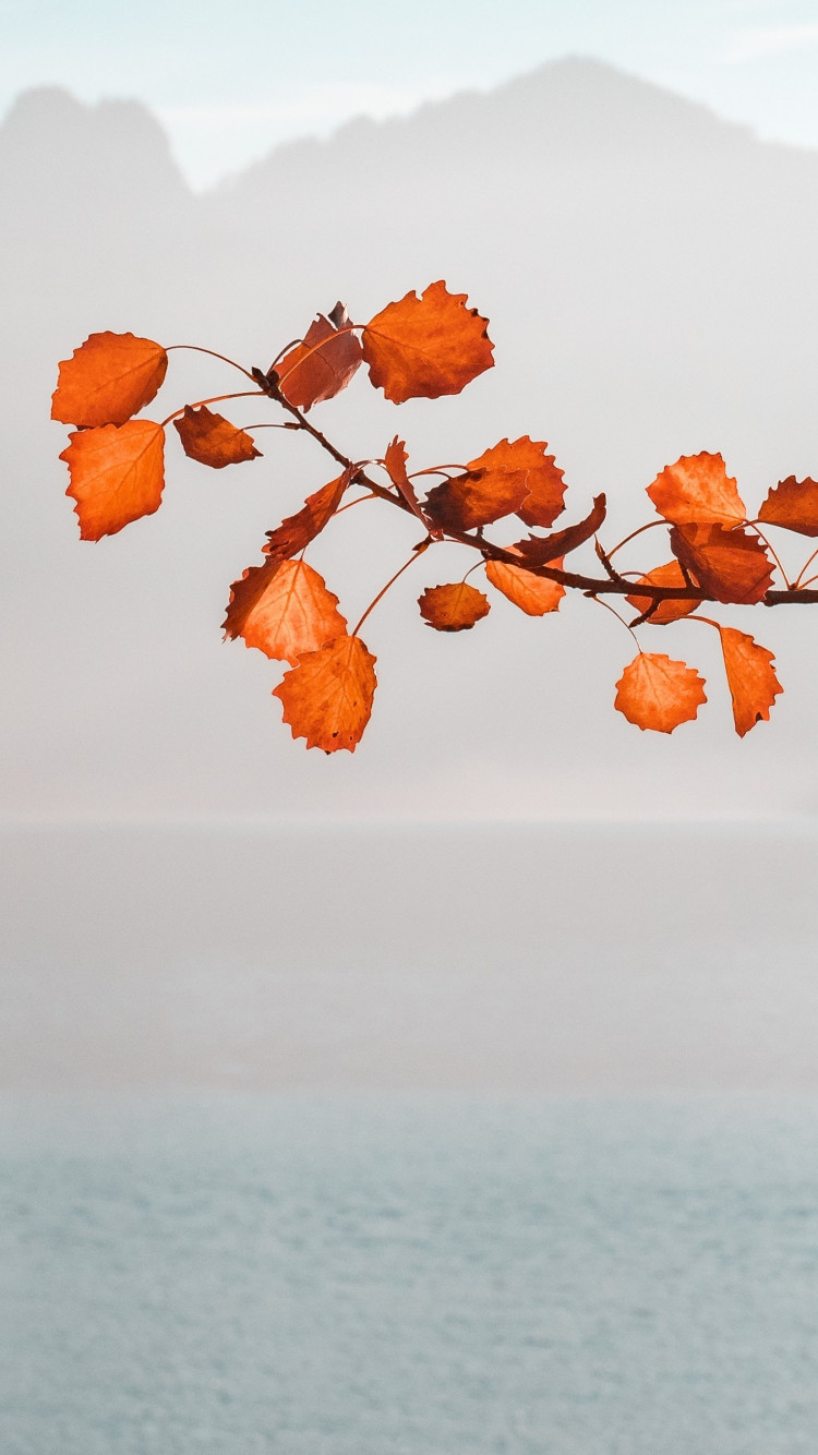Rusty leaves on twig wallpaper 750x1334