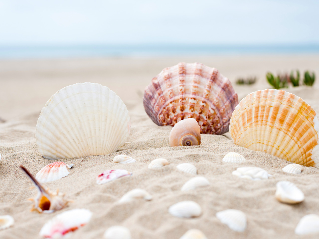 Shells on the ocean beach wallpaper 1280x960