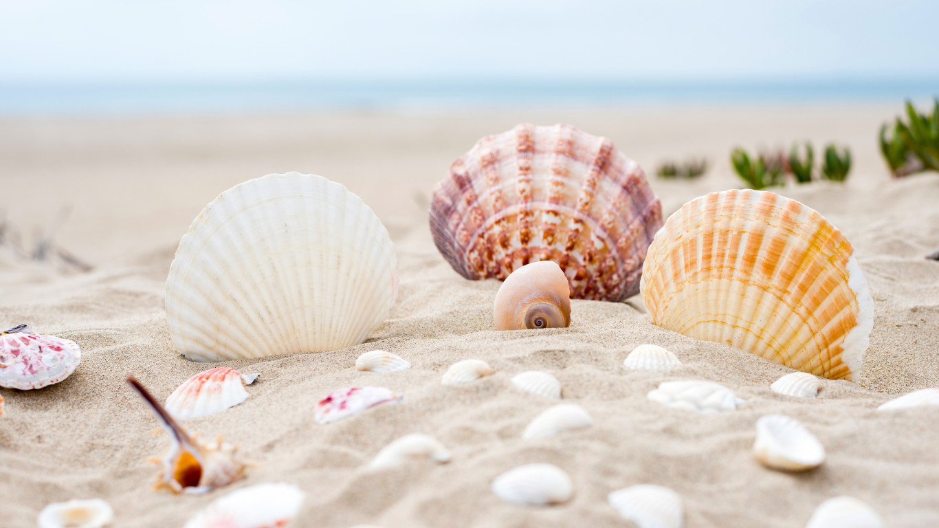Shells on the ocean beach wallpaper 1366x768