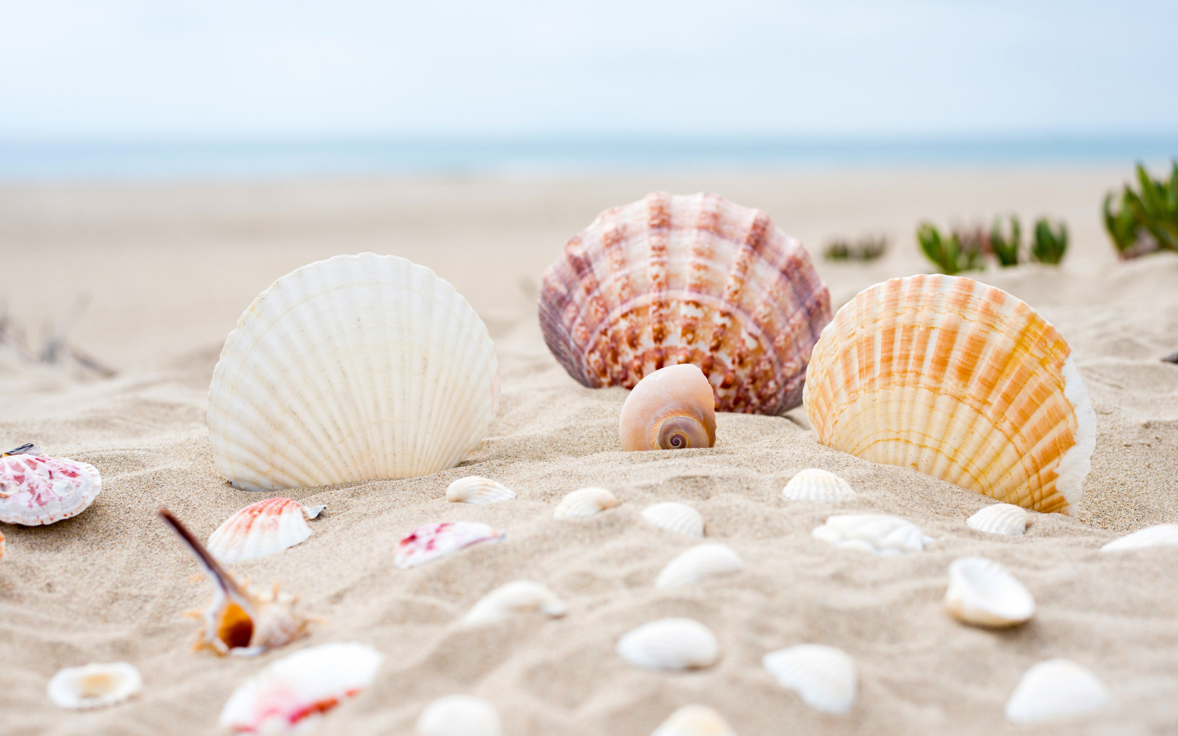 Shells on the ocean beach wallpaper 1680x1050