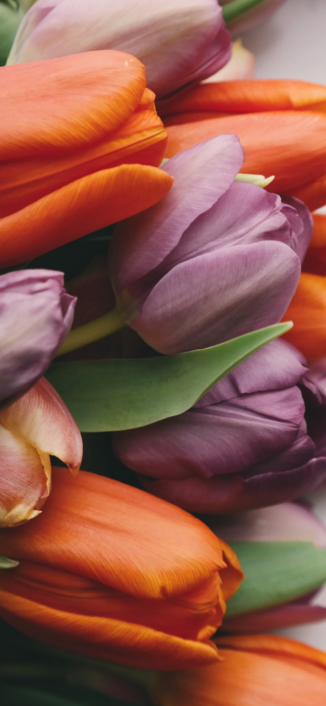 Tulips with love wallpaper 1125x2436