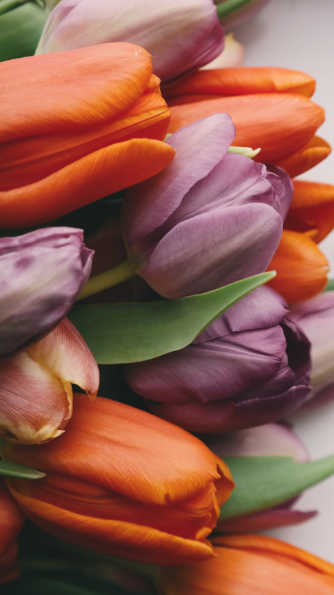 Tulips with love wallpaper 480x854