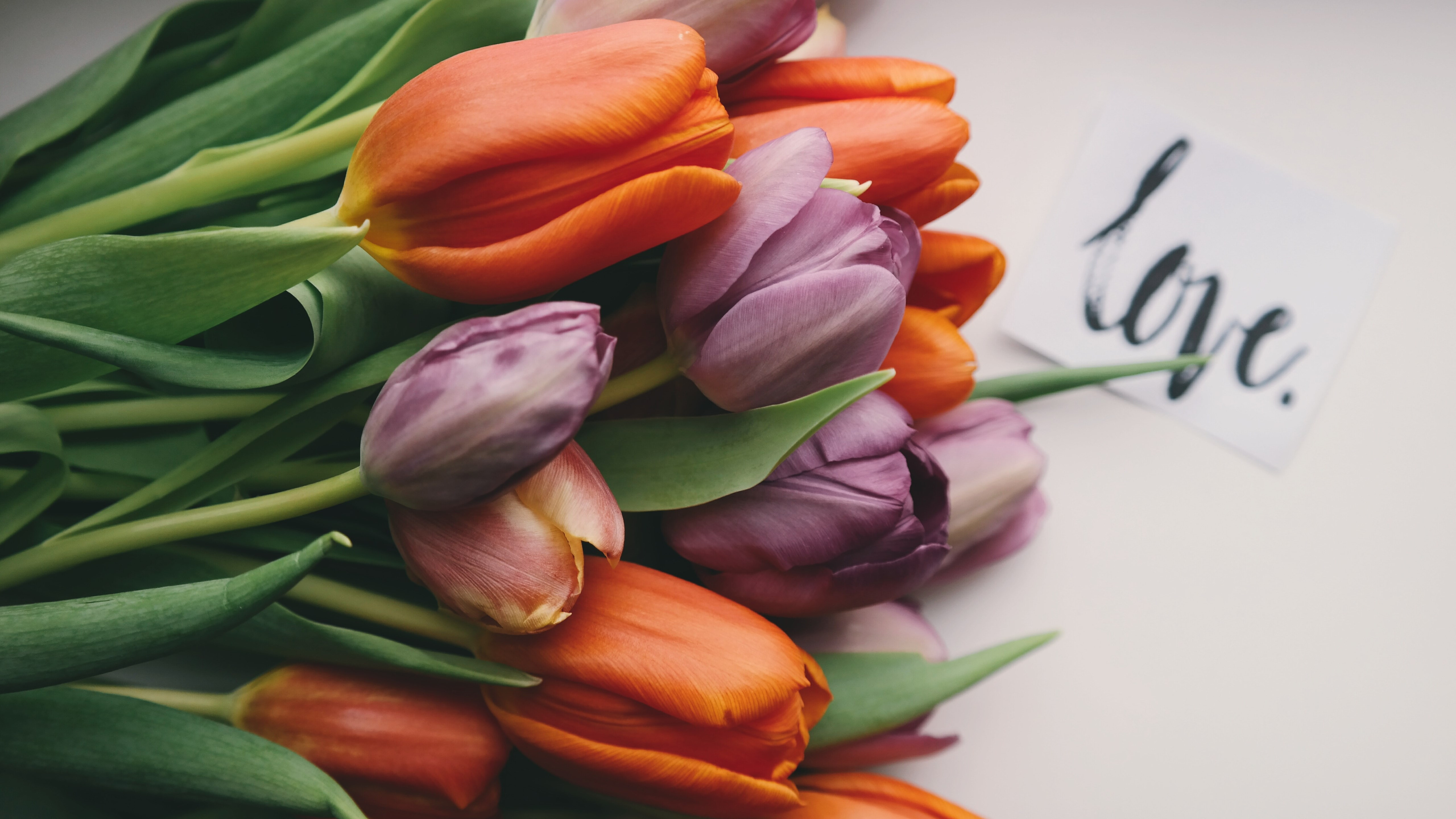Tulips with love | 5120x2880 wallpaper
