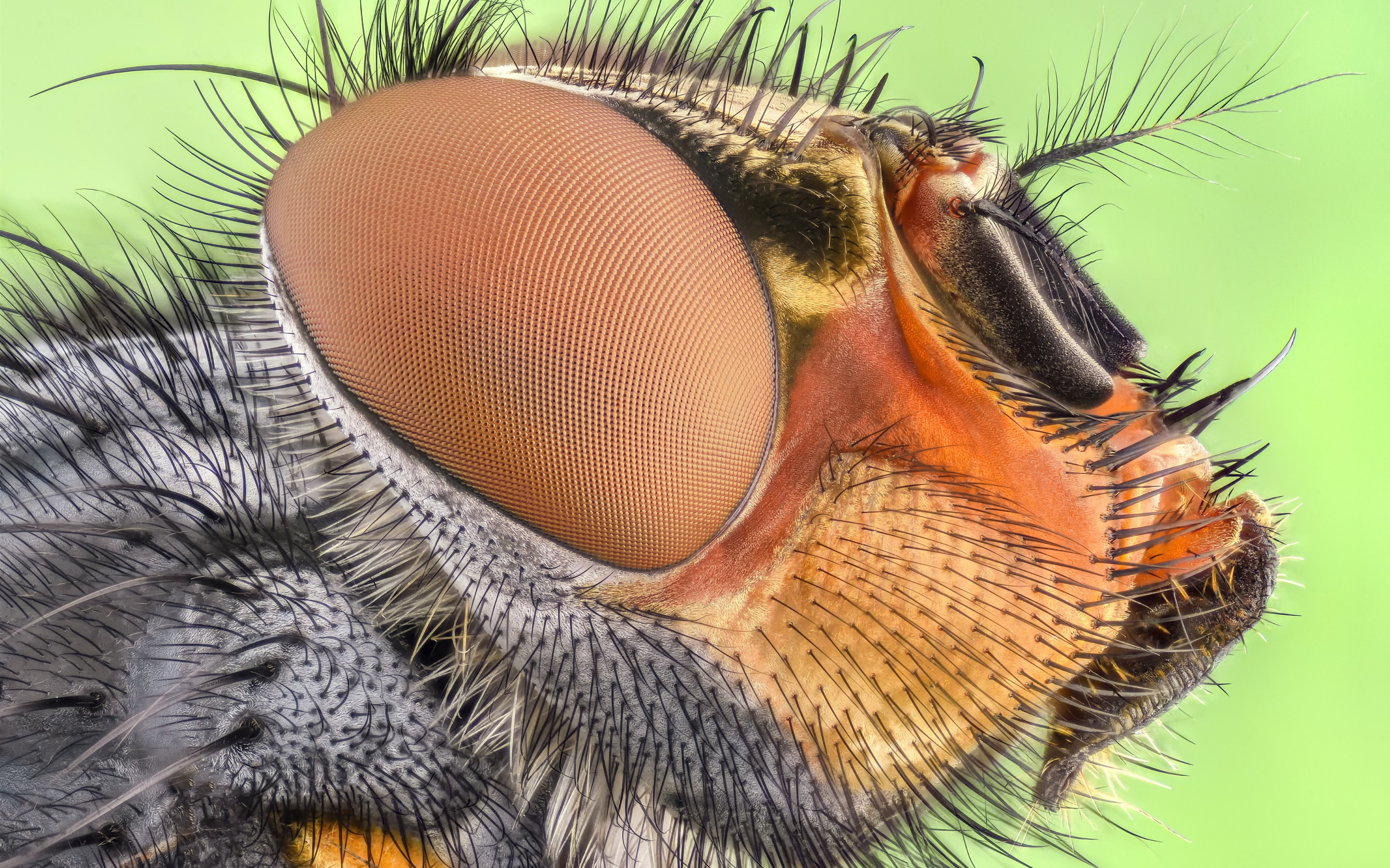 Close up insect portrait | 3840x2400 wallpaper