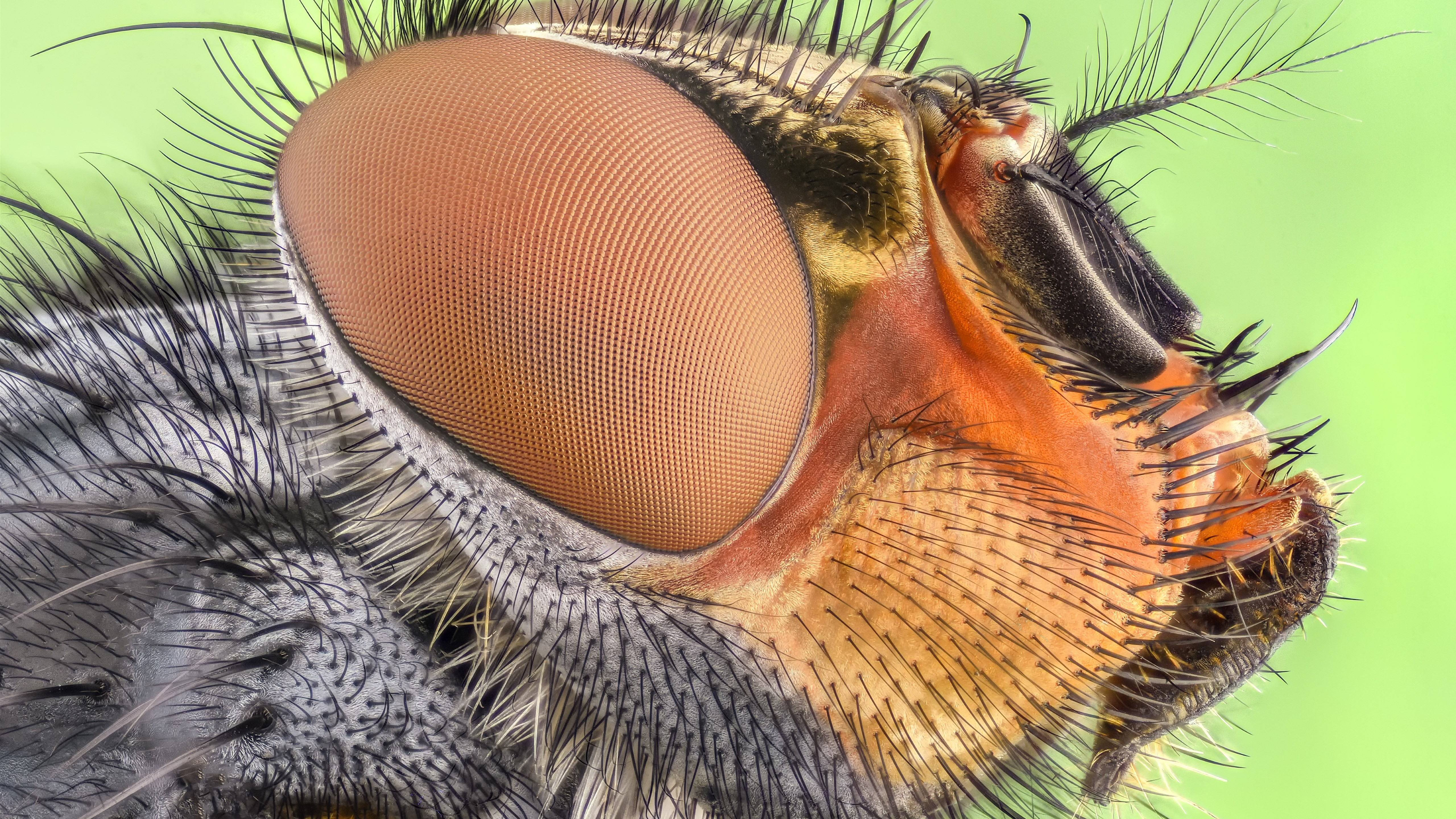 Close up insect portrait wallpaper 5120x2880