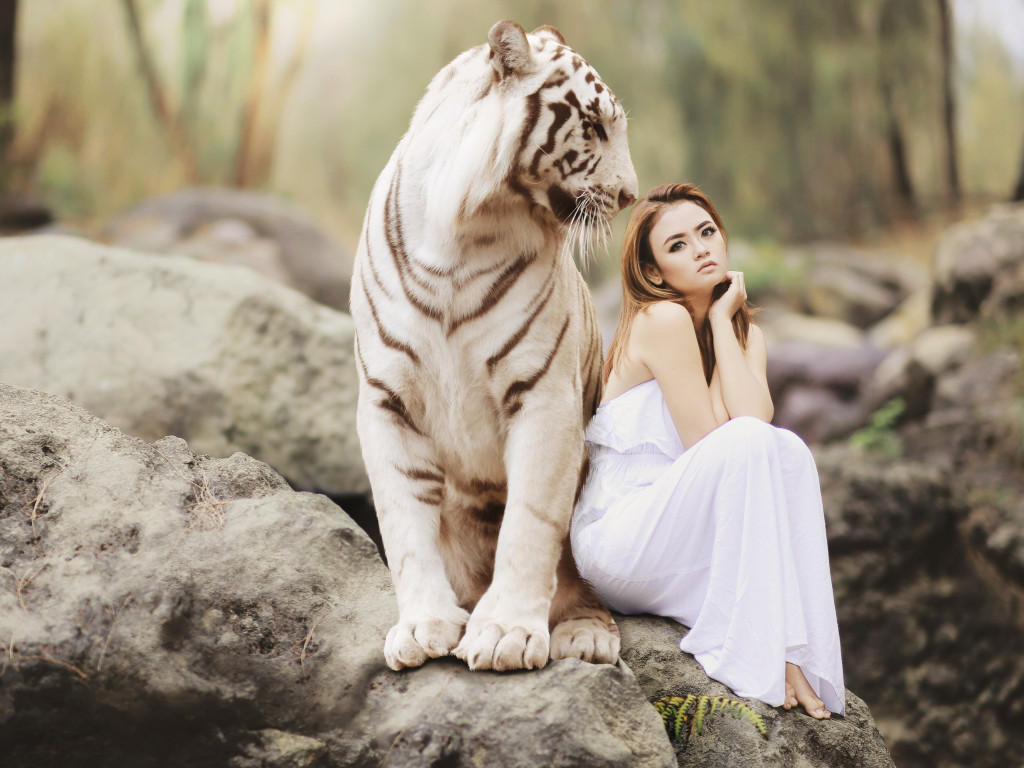 Bengal tiger and a beautiful girl | 1024x768 wallpaper