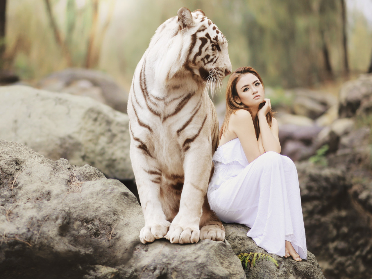 Bengal tiger and a beautiful girl wallpaper 1280x960