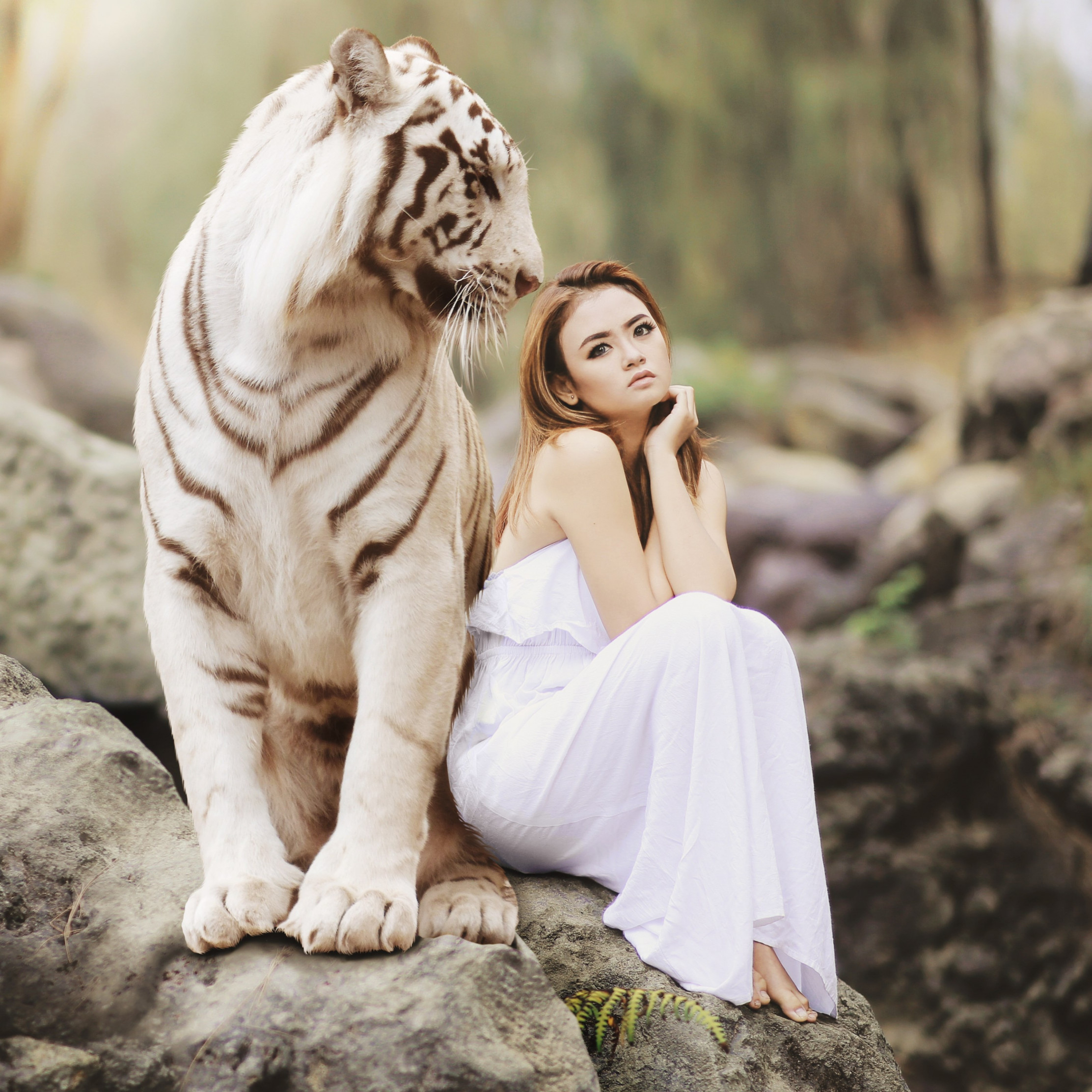 Bengal tiger and a beautiful girl wallpaper 2224x2224