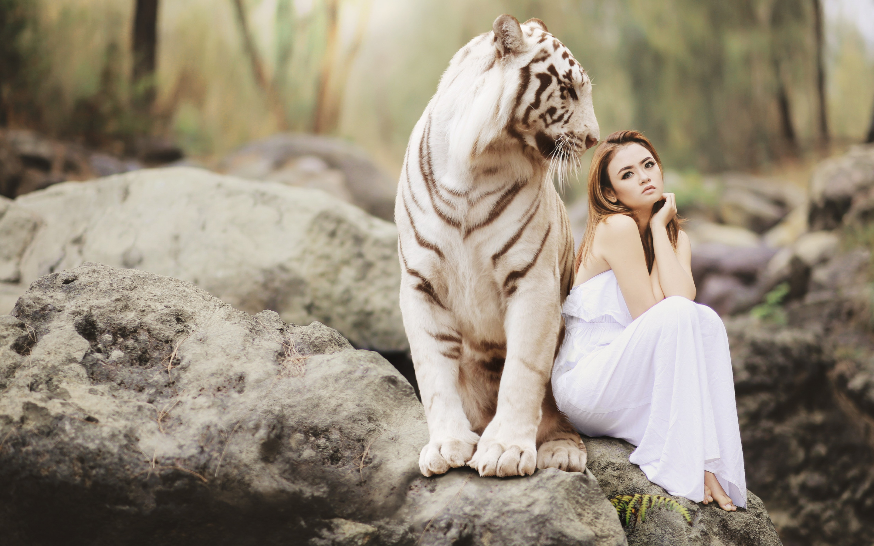 Bengal tiger and a beautiful girl wallpaper 2880x1800