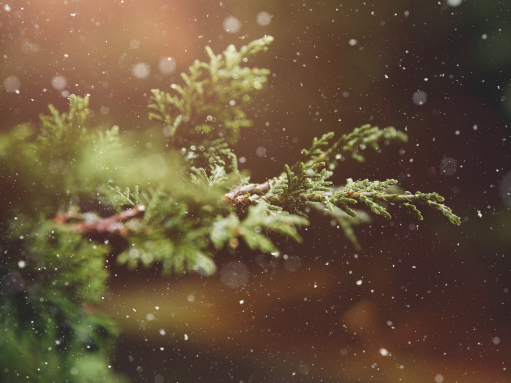 Snowflakes over the pine branch wallpaper 1024x768