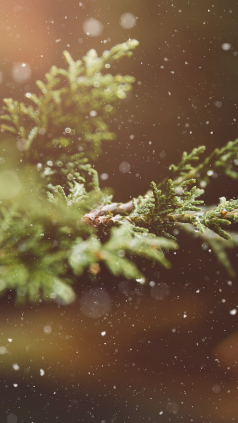 Snowflakes over the pine branch wallpaper 480x854