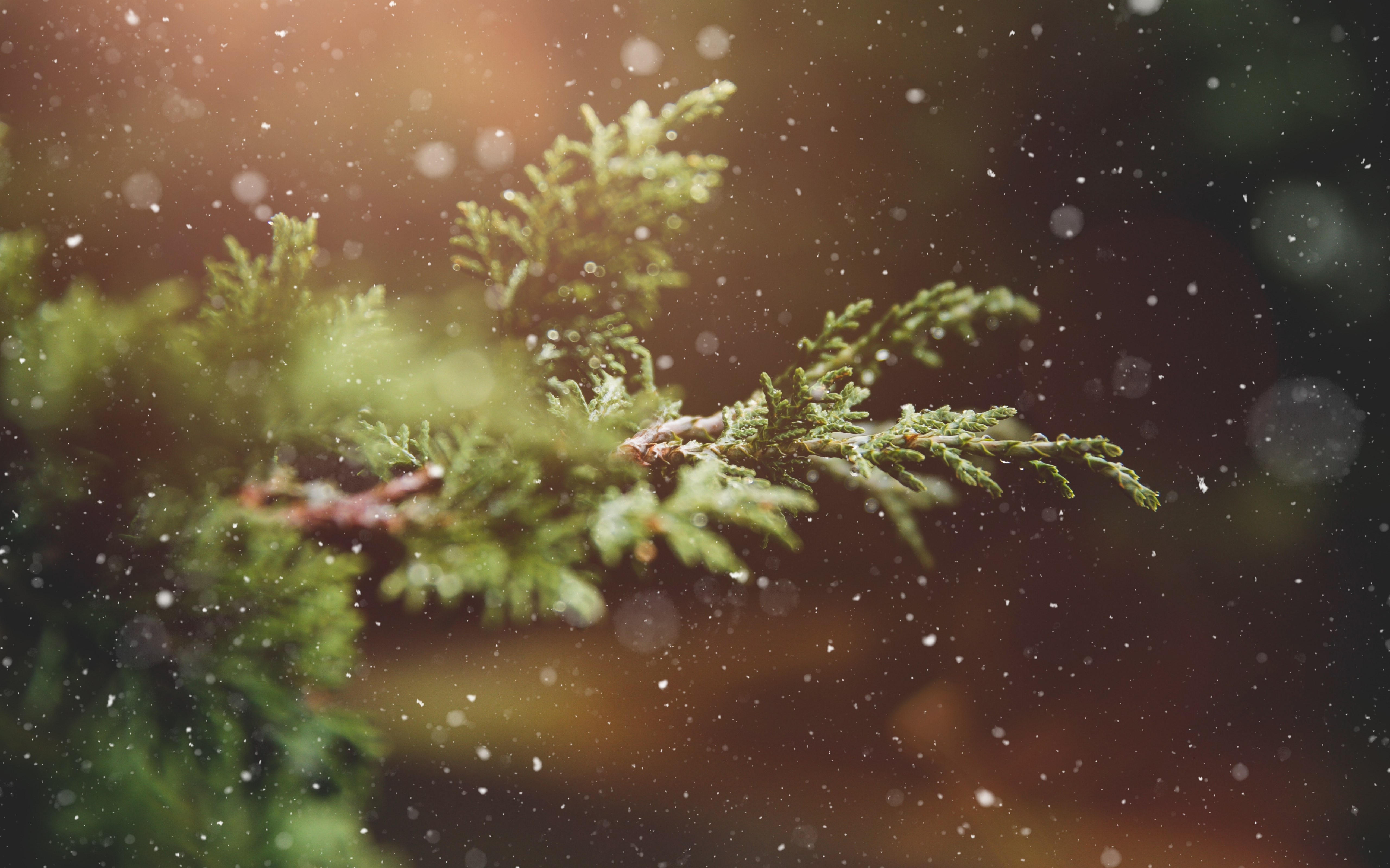 Snowflakes over the pine branch wallpaper 5120x3200
