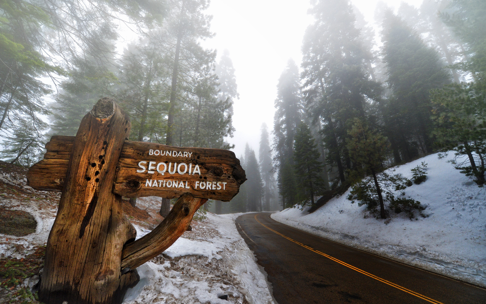 Sequoia National Park wallpaper 1920x1200