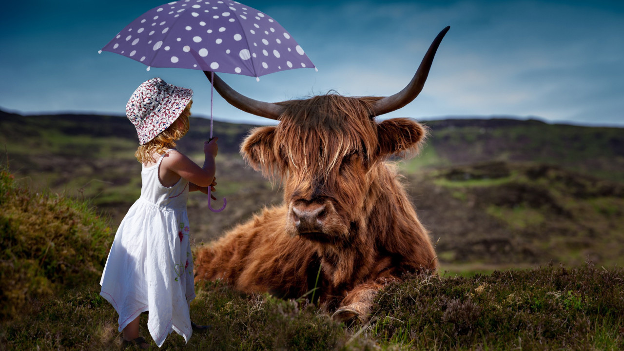 Child with the umbrella and the funny cow wallpaper 1280x720
