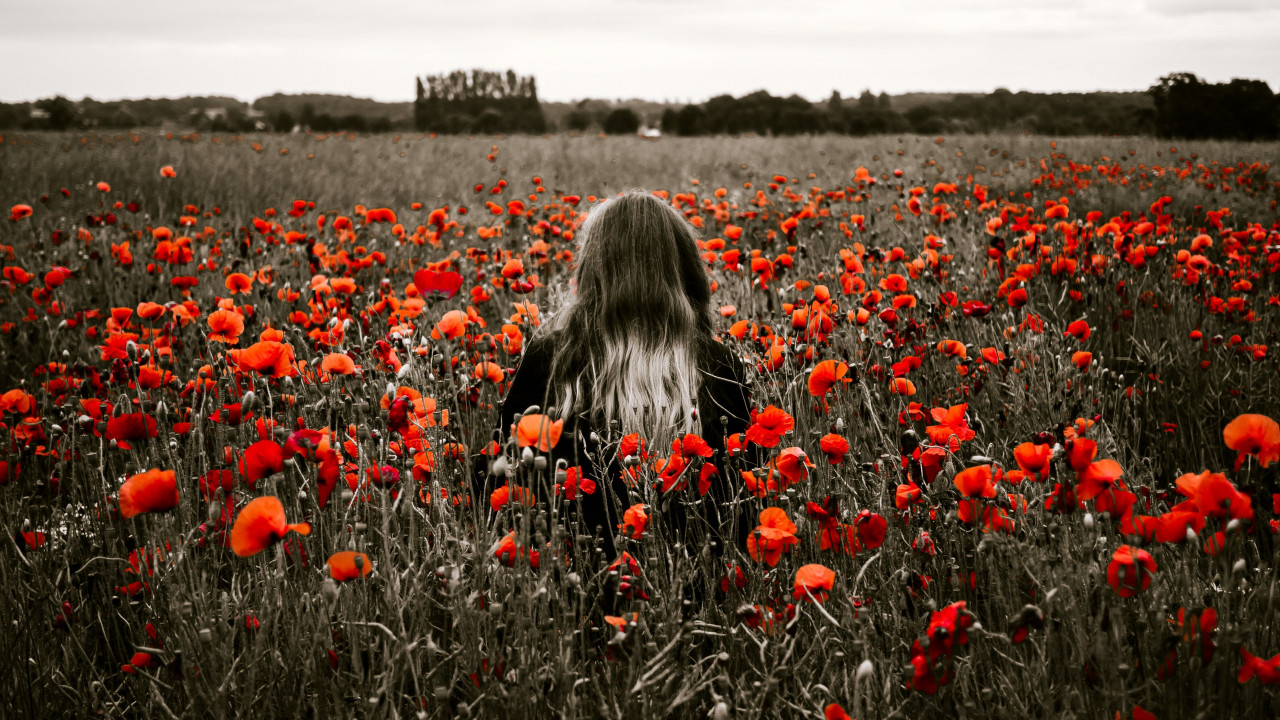 Girl in the field with red poppies wallpaper 1280x720