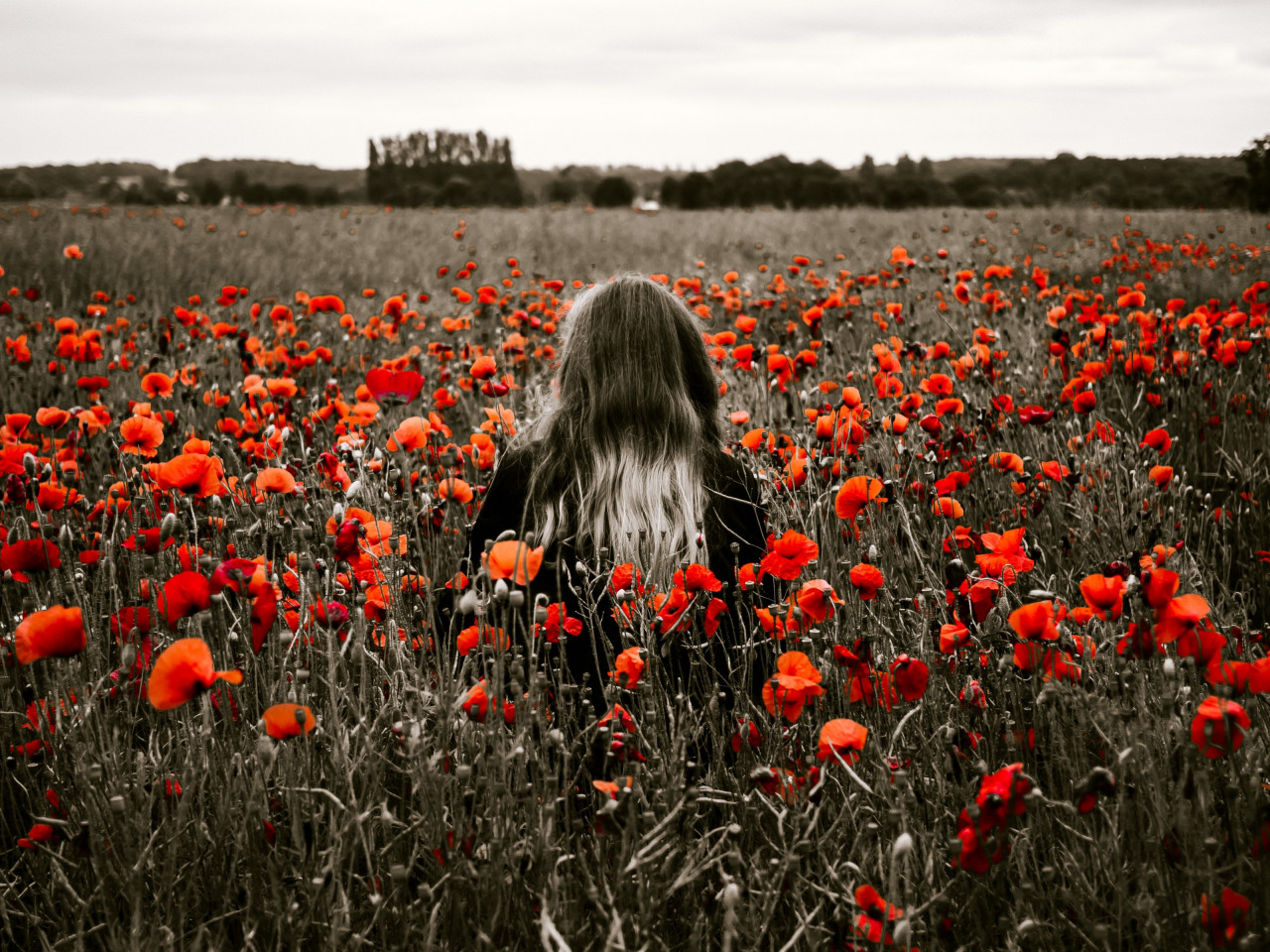 Girl in the field with red poppies wallpaper 1280x960