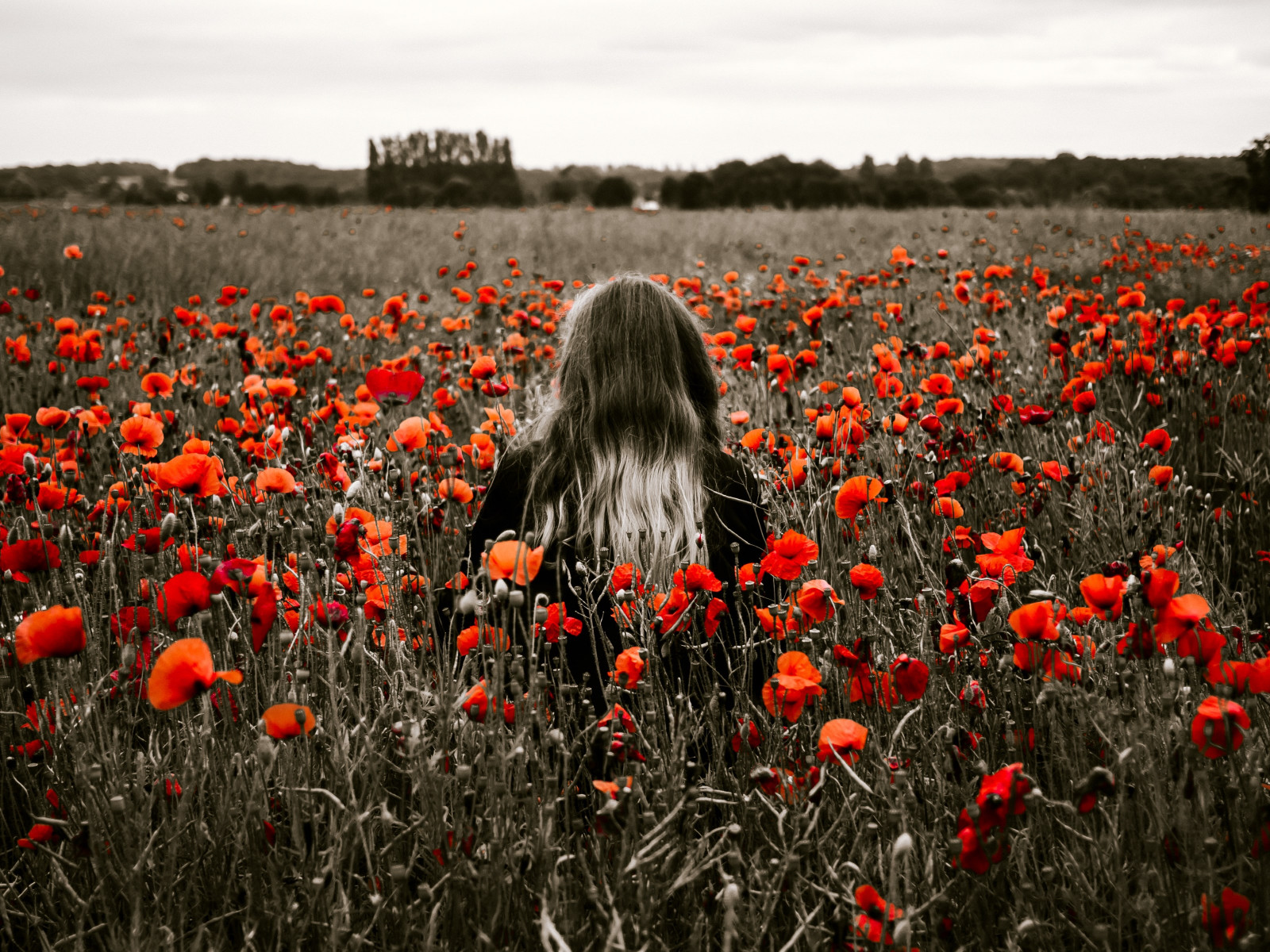 Girl in the field with red poppies wallpaper 1600x1200