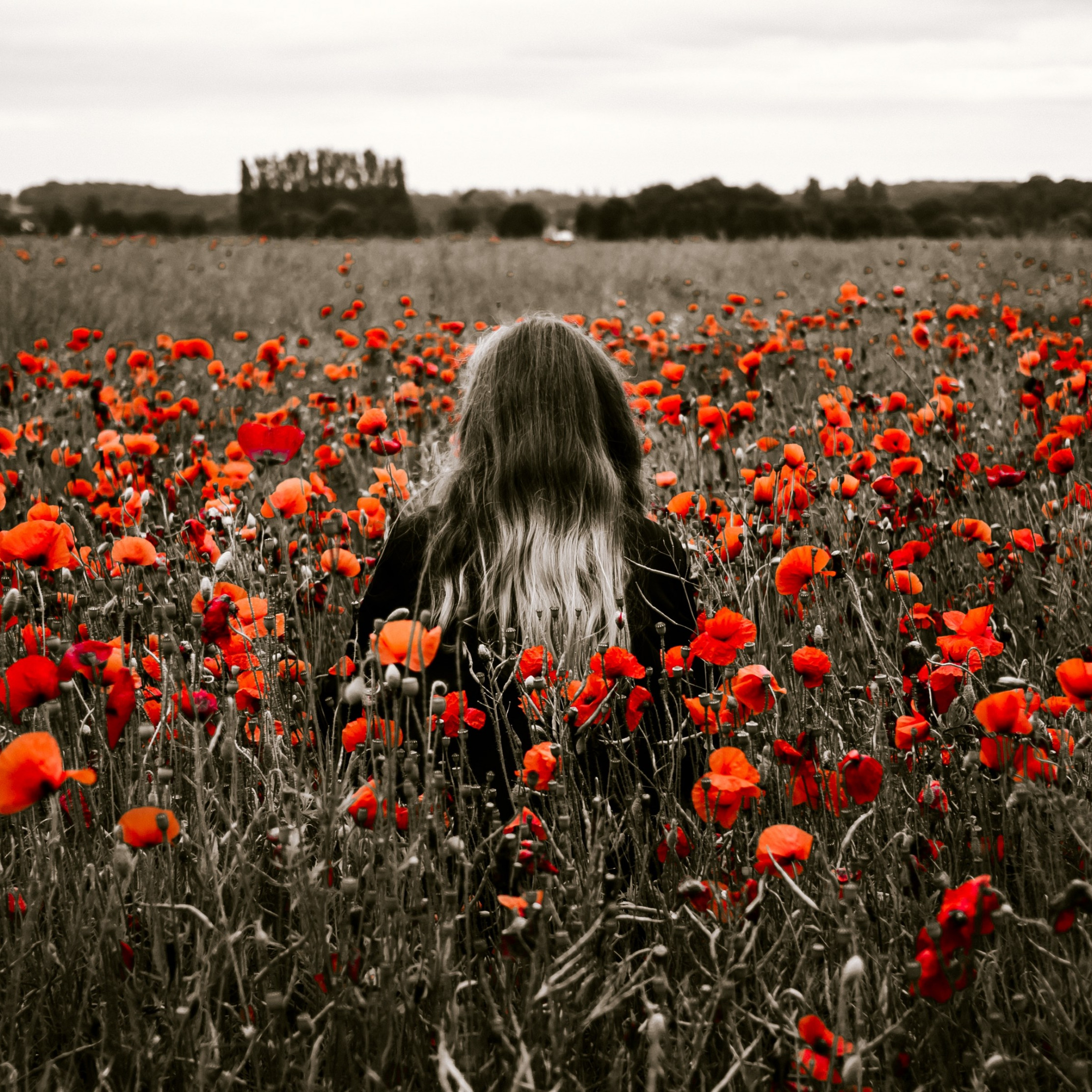 Girl in the field with red poppies wallpaper 2224x2224