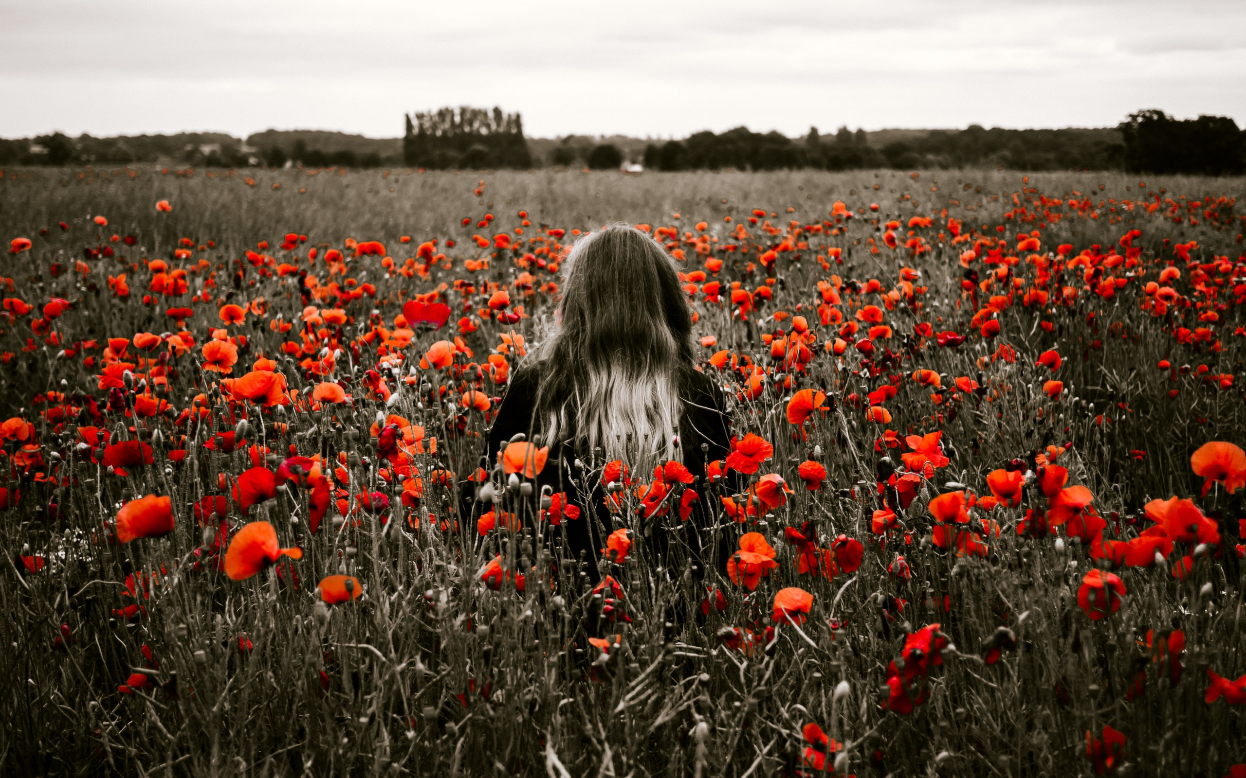 Girl in the field with red poppies wallpaper 2560x1600