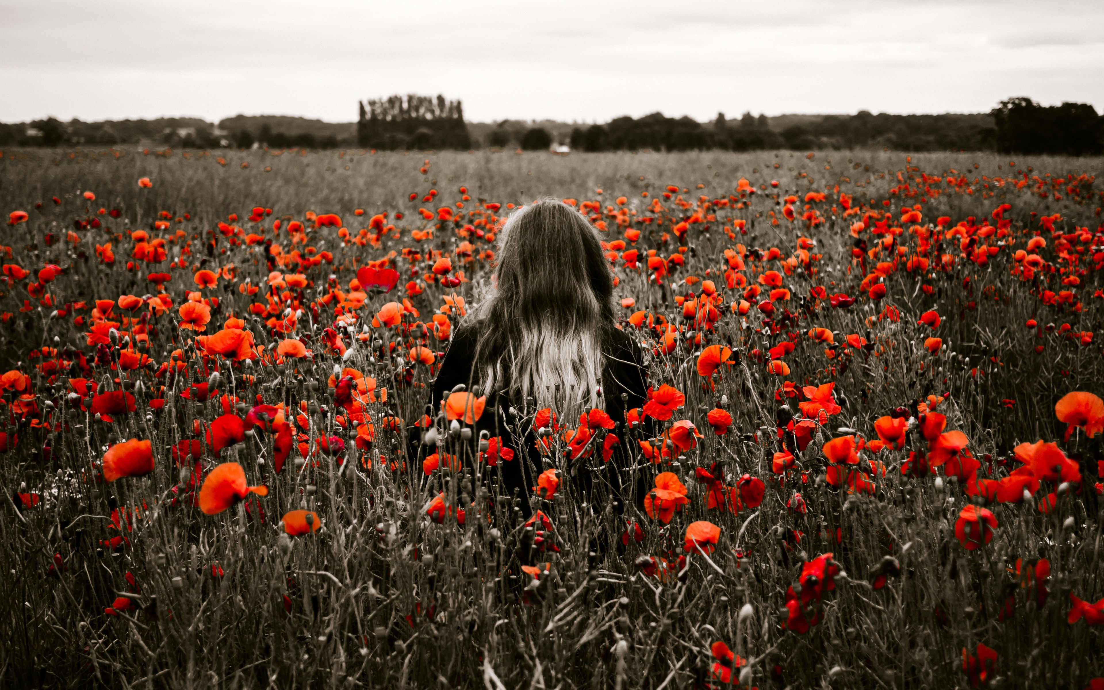 Girl in the field with red poppies wallpaper 3840x2400