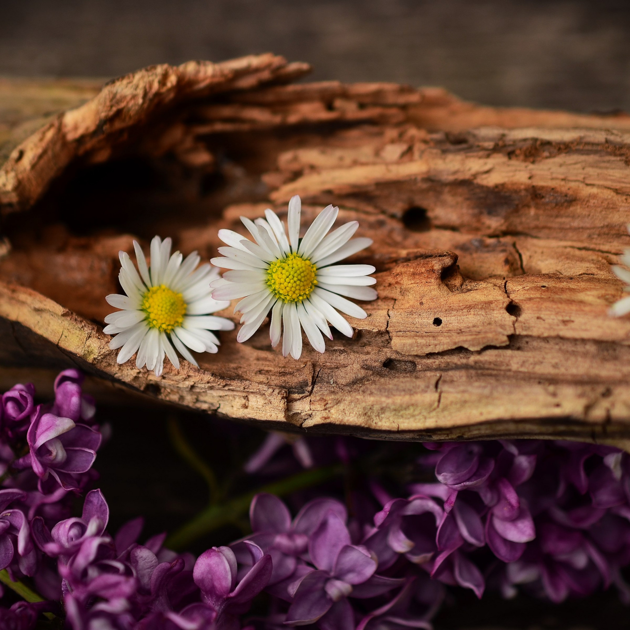 Old wood, lilac and daisy flowers wallpaper 2048x2048