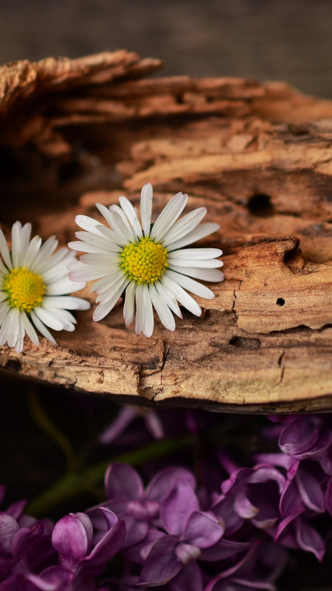 Old wood, lilac and daisy flowers wallpaper 480x854