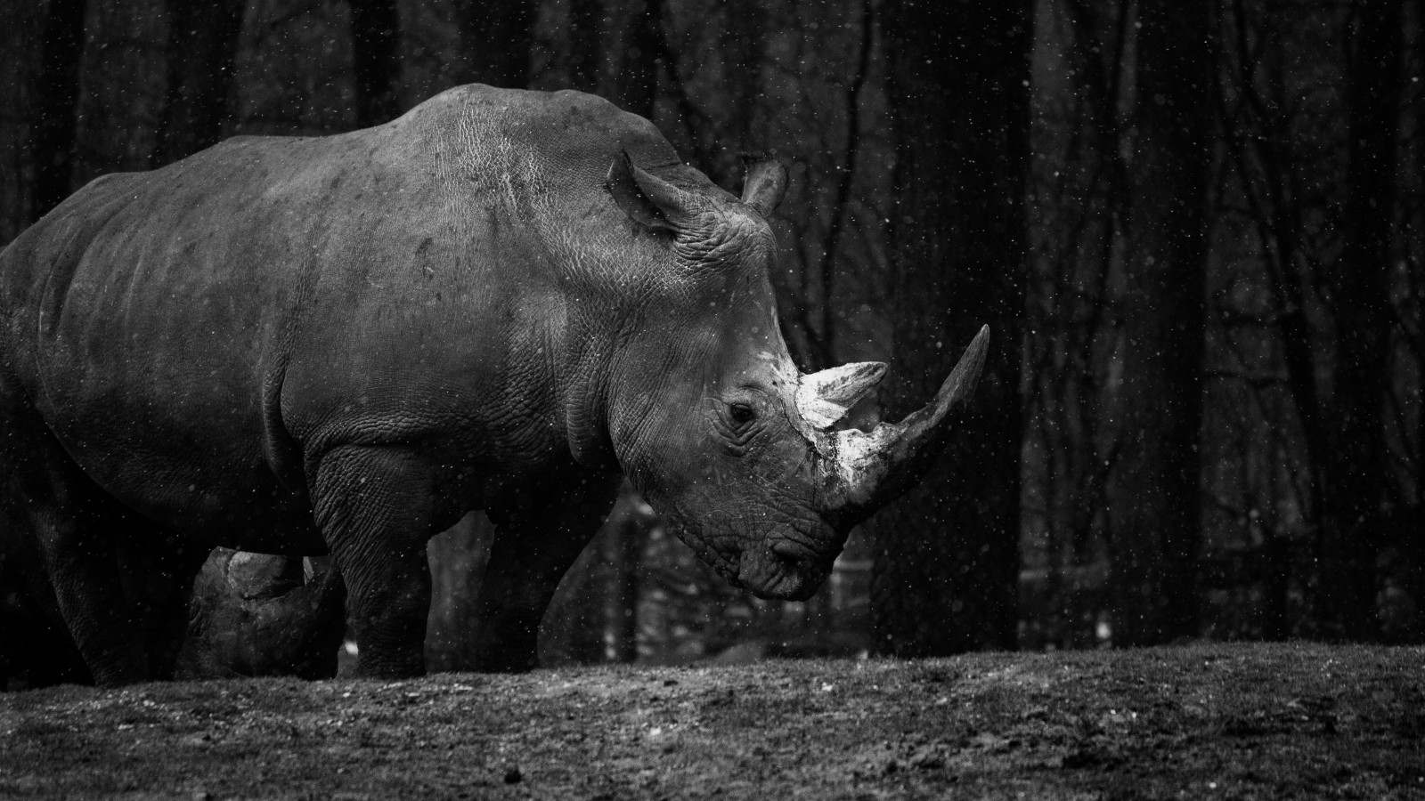 Rhino at zoo wallpaper 1600x900