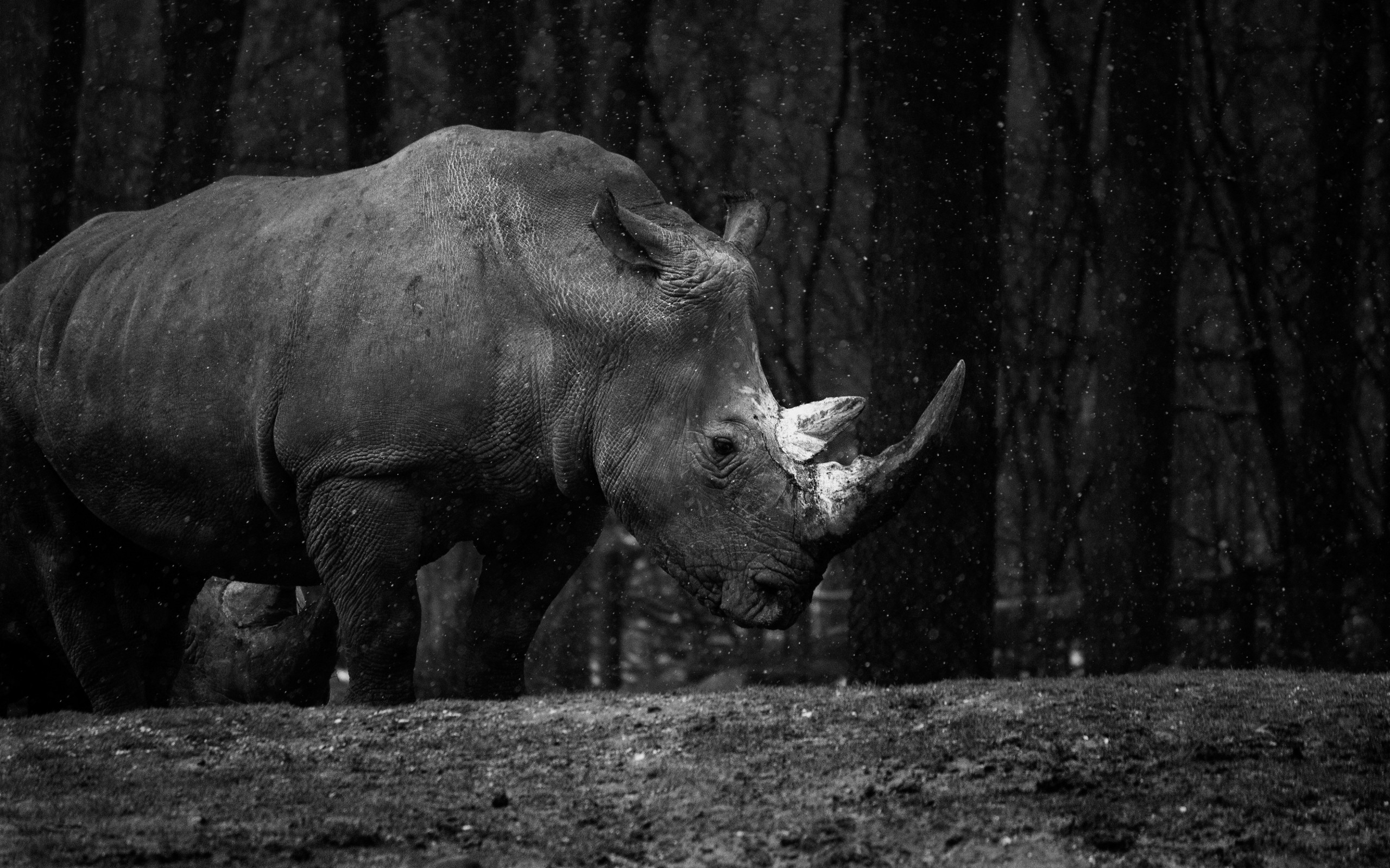 Rhino at zoo wallpaper 2560x1600