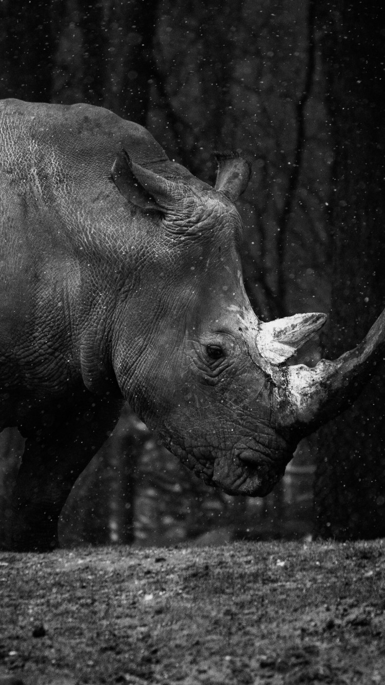 Rhino at zoo wallpaper 750x1334