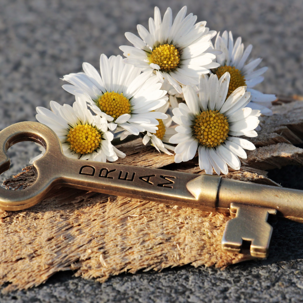 The dreams key and daisy flowers wallpaper 1024x1024