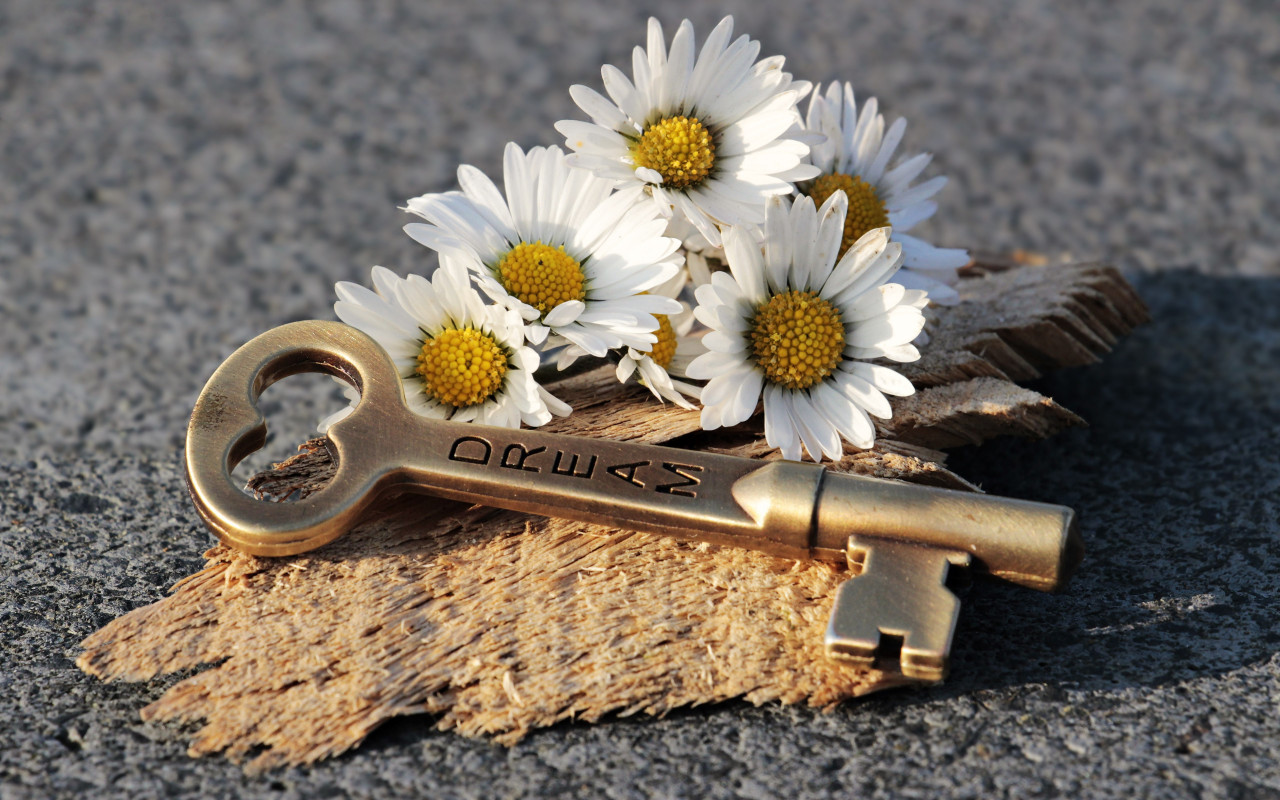The dreams key and daisy flowers wallpaper 1280x800